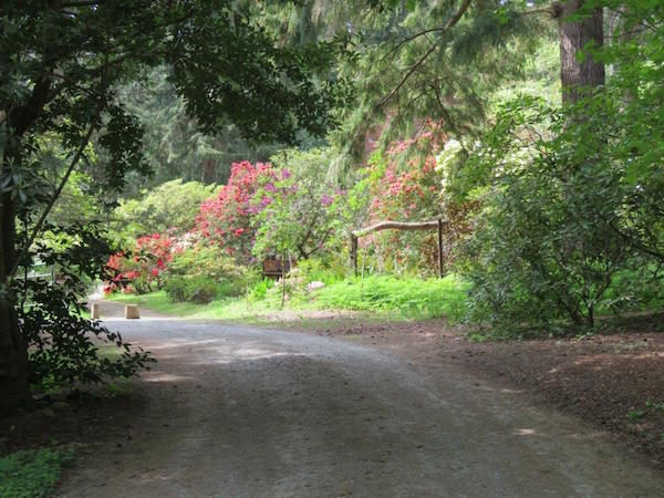 Woodland path (photo by Linda Russell)