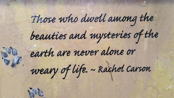 10. Rachel Carson