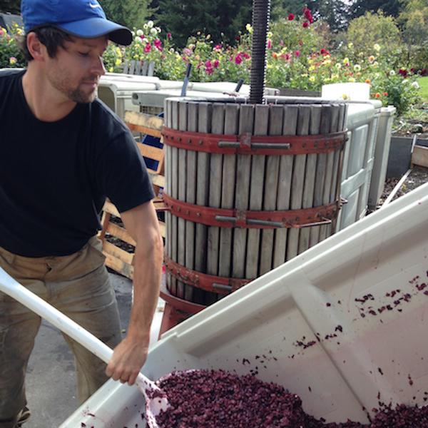 Chris Hunter, Ott & Murphy winemaker, at the grape press (photo courtesy of Chris Hunter)