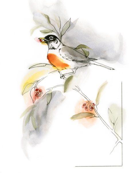 11-american-robin