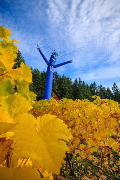 Yellow grape leaves at Whidbey Island Winery contrast with the blue and green windsock and a 12th Man scarecrow