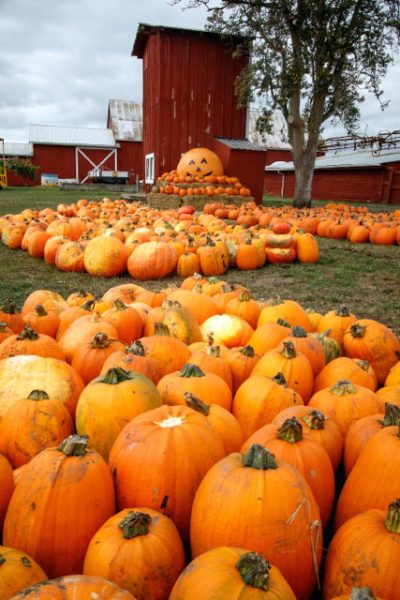 Sherman Farm pumpkins and jeweled spider webs set the stage for Halloween.