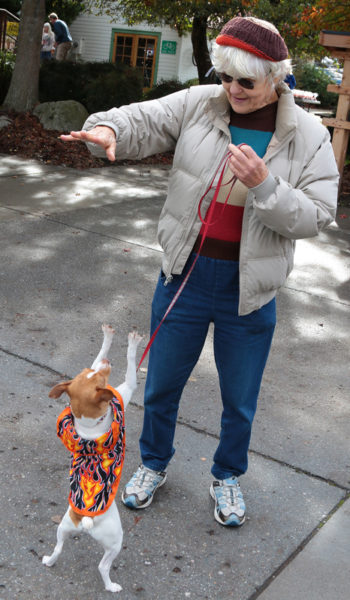 Dog in flame costume standing on hind legs with woman holding out her arm.