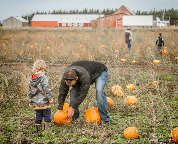 A father looks at the bottom of a pumpkin as his young son watches.