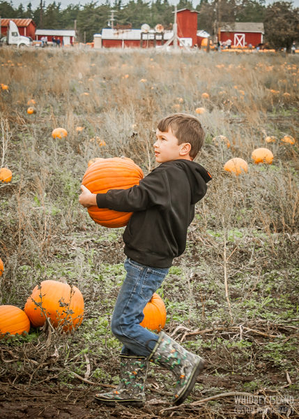 A young boy carries a large pumpkin.