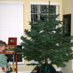 Child looking at Christmas tree